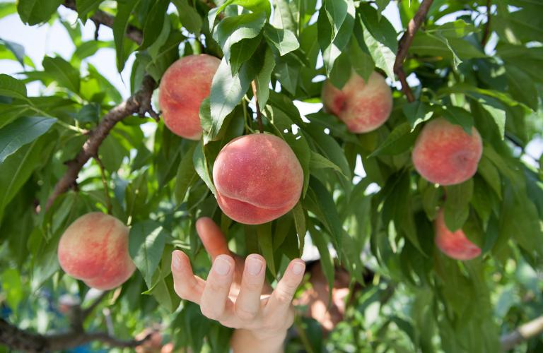 Cybercrime Low Hanging Fruit Looks Tasty It
