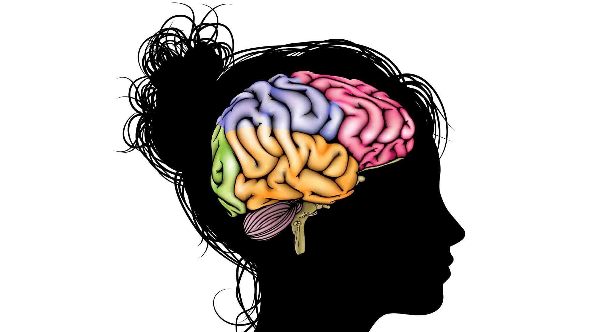 Resultado de imagen para brain